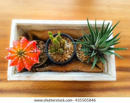 selective focus of cactus in brown potted on wood table, vintage color - stock photo
