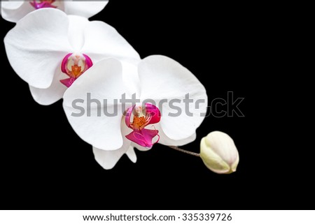selective focus of fresh orchid isolated on black.