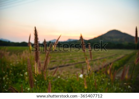 selective focus of landscape grassland with mountain and sky on winter season - stock photo