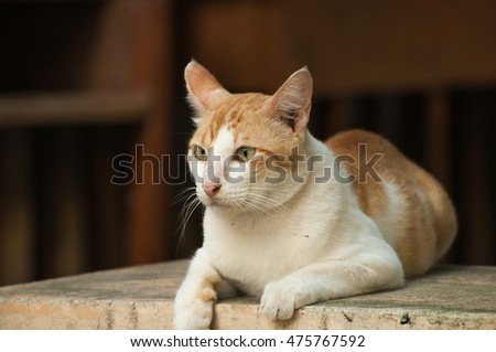 Selective focus on face of white and yellow color cat lying on the bench and looking something, blurred background, copy space