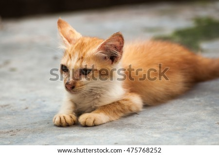 Selective focus on face of yellow color cat (stray cat) lying on the floor, blurred background