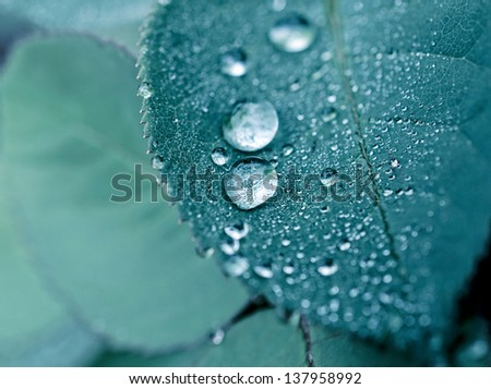 Selective focus on water drop in the middle - stock photo
