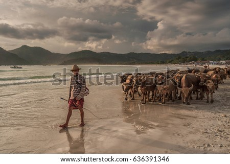 Selong Belanak beach, South Lombok, Indonesia - April 21, 2017 : Shepherd leading his herd home over the beach