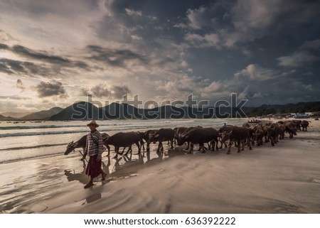 Selong Belanak beach, South Lombok, Indonesia - April 21, 2017 : Shepherd leading his herd home over the beach close to sunset