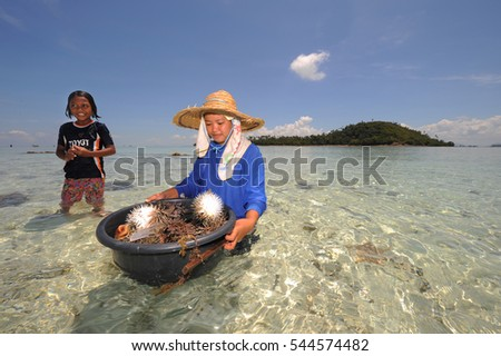 SEMPORNA, MALAYSIA- MARCH 3, 2015 : Unidentified bajau woman collecting pufferfish (Tetraodontidae) for selling at a area in Semporna, Malaysia.