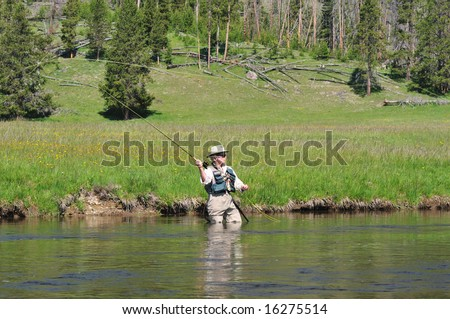 Senior citizen standing in the Firehole River in Yellowstone Park casting a fly-fishing rod.