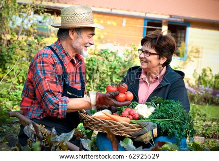 Senior couple with a basket of harvested vegetables in the garden - stock photo