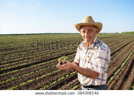 Senior farmer in a field holding crop in his hands - stock photo