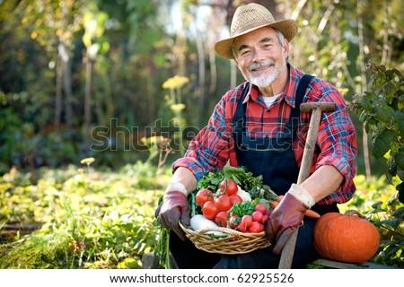 Senior gardener with a basket of harvested vegetables  in the garden - stock photo