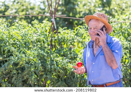 Senior gardener with a mobile in hand and a harvested tomatoes in the garden - stock photo