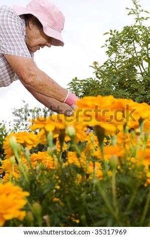 senior lady doing some gardening - stock photo