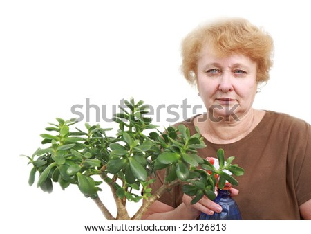 Senior lady freshens an indoor plant a spray. Isoltaed