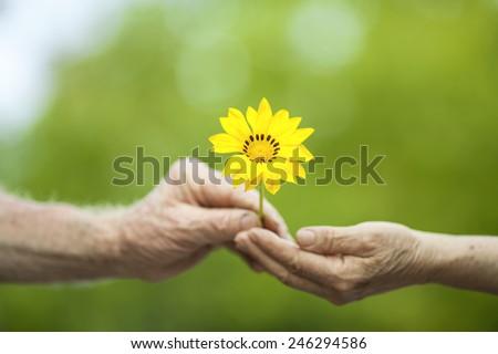 Senior Love - stock photo