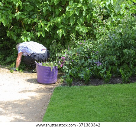 Senior Male Gardener Weeding in a Country Cottage Garden in the Rural Village of Dyrham, South Gloucestershire, England, UK - stock photo