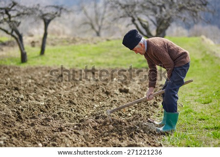 Senior man covering the potatoes with ground; sowing potatoes activity - stock photo