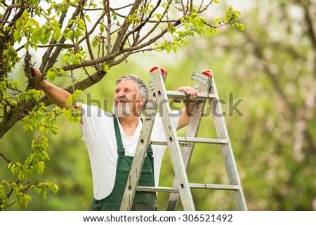 Senior man gardening in his garden (color toned image) - stock photo
