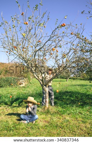 Senior man moving tree and fresh organic apples falling over a happy cute kid sitting on the grass. Grandparents and grandchildren leisure time concept. - stock photo