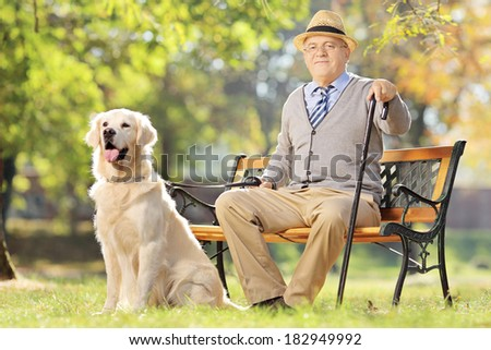 Senior man seated on a wooden bench with his labrador retriever dog relaxing in a park - stock photo
