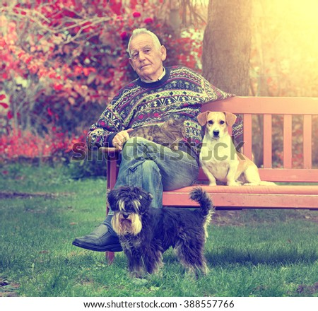 Senior man sitting on bench in the park with cat in the lap and two dogs beside him - stock photo