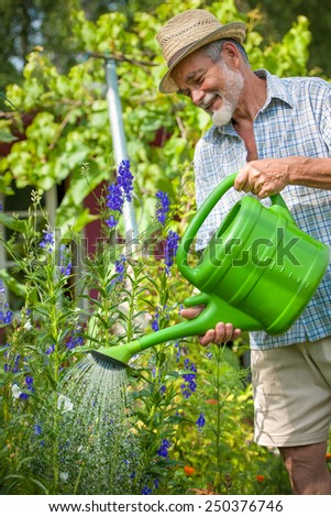 Senior man watering the flowers in  the garden - stock photo