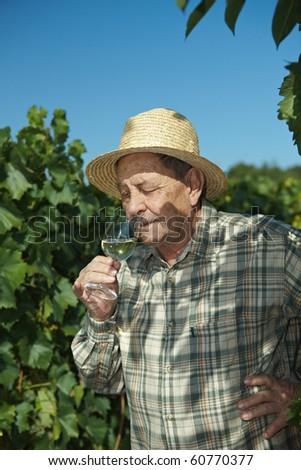 Senior winemaker tasting wine outdoors in vinery. - stock photo