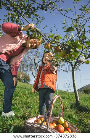 Senior woman and little girl picking apples from tree - stock photo