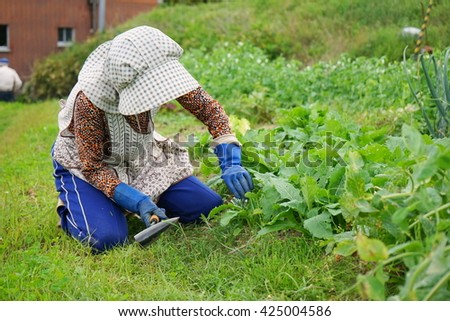Senior woman growing organic fresh vegetables in the garden