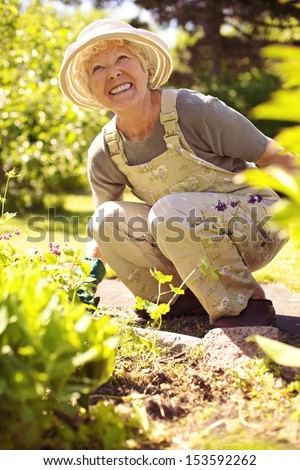 Senior woman happily working with plants in her garden - Old woman gardening in backyard - stock photo
