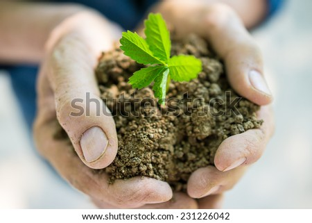 Senior woman holding young spring plant in hands for ecology and agriculture concept - stock photo