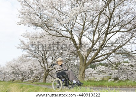 Senior woman in a wheelchair with cherry blossoms - stock photo