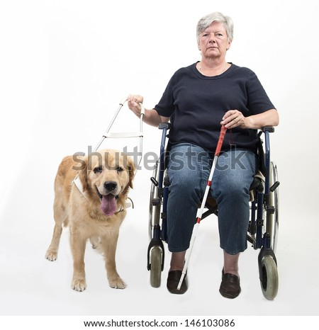 Senior woman in wheelchair with guide dog isolated on white