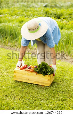 Senior woman picking up the box filled fresh vegetables - stock photo