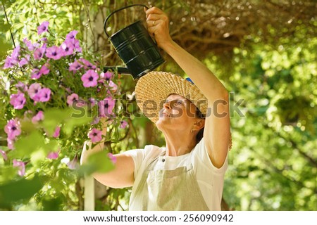 Senior woman waters the flowers in a hanging pot. She is standing under a vine covered pergola.  - stock photo