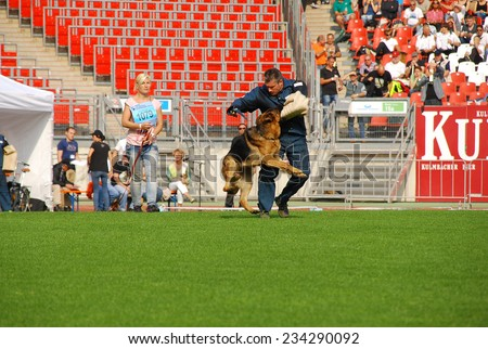 SEP 07, 2014 NURNBERG Working ability test on biggest german shepherds dog show in Germany - stock photo
