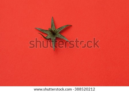 sepals of tomato on red - stock photo