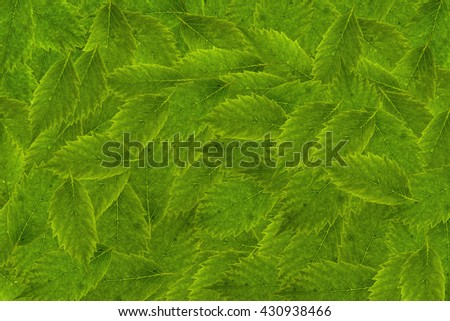 separate green leaves on the isolated background - stock photo