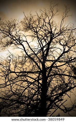 Sepia abstract branches silhouette with vignette effect.