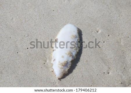 Sepia bone from the sea - stock photo