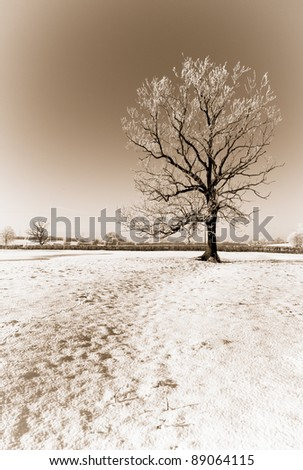 Sepia Frozen Tree