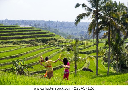 SEPTEMBER 17, 2014 - BALI, INDONESIA: Unidentified Balinese girls dressed in traditional costumes walk across the terraced paddy fields to the village temple for a religious ceremony. - stock photo