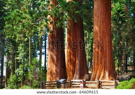 sequoia national Park - stock photo