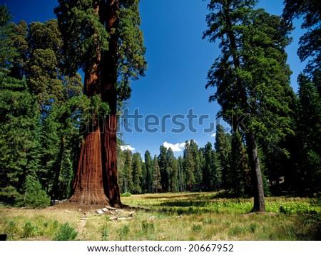 Sequoia National Park - California - stock photo