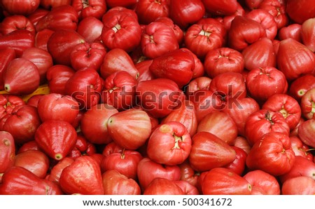 SEREMBAN, MALAYSIA -OCTOBER 01, 2016: Jambu air or the scientific name is Syzygium aqueum. Also known as water cherry or water rose apple. Is is a tropical fruit and taste very juicy.