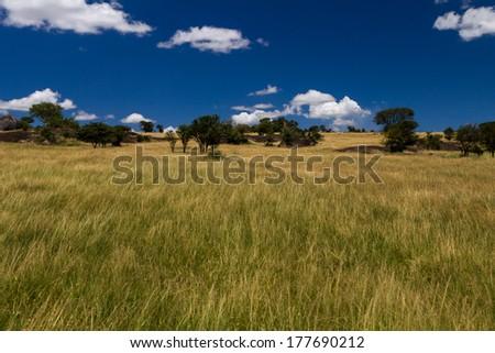 Serengeti national park, landscape - stock photo
