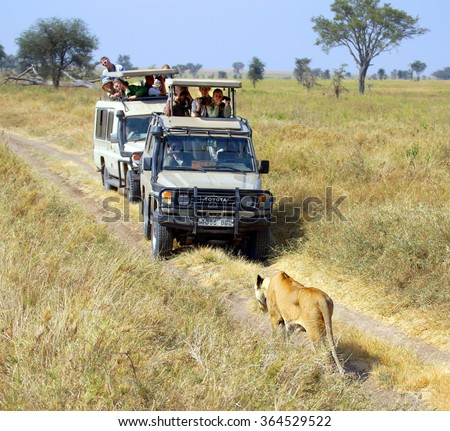 SERENGETI - TANZANIA ; Photographers and tourists are spotting a lion during a safari on a 4x4 Jeep through a National Park in Africa on june 12, 2013  - stock photo