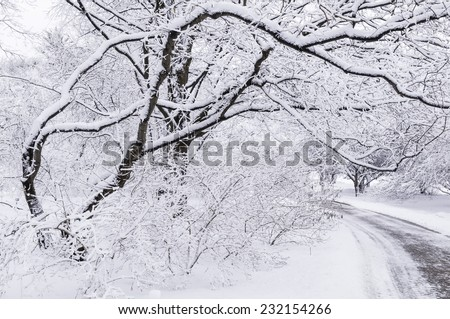 Serenity after a snowstorm - stock photo