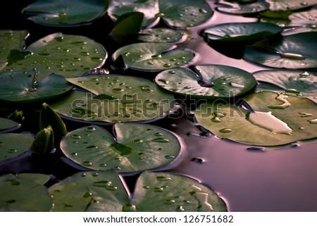 Serenity. Lily Pond - stock photo
