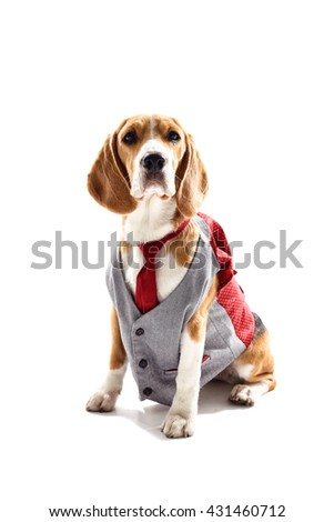 Serious business dog in elegant costume - stock photo
