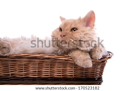 Serious cat is isolated on a black and white background - stock photo