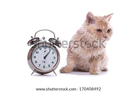 Serious cat with watches are isolated on a white background - stock photo